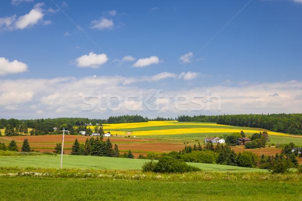 Verano paisaje granjas campos rojo Foto stock © elenaphoto