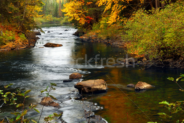 Forest river in the fall Stock photo © elenaphoto