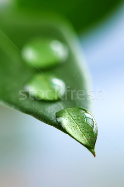 Green leaf with water drops Stock photo © elenaphoto
