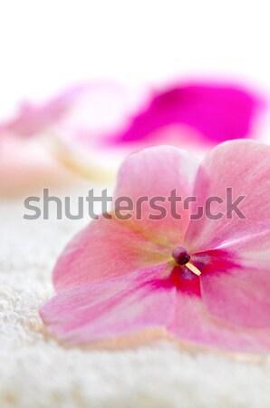 Gentle flower on luxury towel Stock photo © elenaphoto