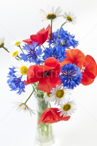 диких цветов букет Полевые цветы Ромашки белый Сток-фото © elenaphoto
