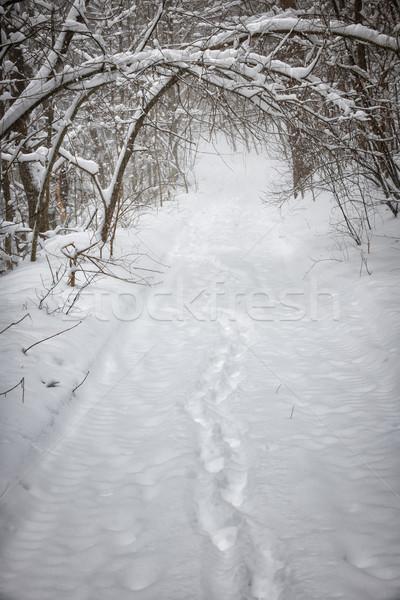 Inverno percorso foresta impronte pesante rami Foto d'archivio © elenaphoto
