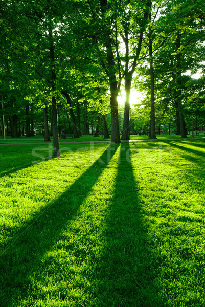 Zdjęcia stock: Zielone · parku · długo · drzewo · wiosną