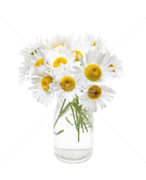 Bouquet of daisies Stock photo © elenaphoto