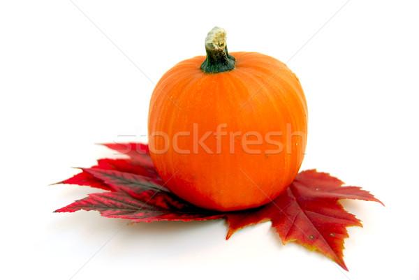 Stock fotó: Mini · sütőtök · őszi · levelek · fehér · háttér · levelek
