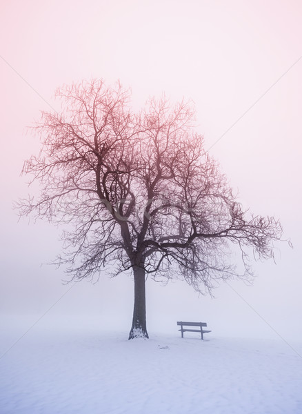 Winter tree in fog at sunrise Stock photo © elenaphoto
