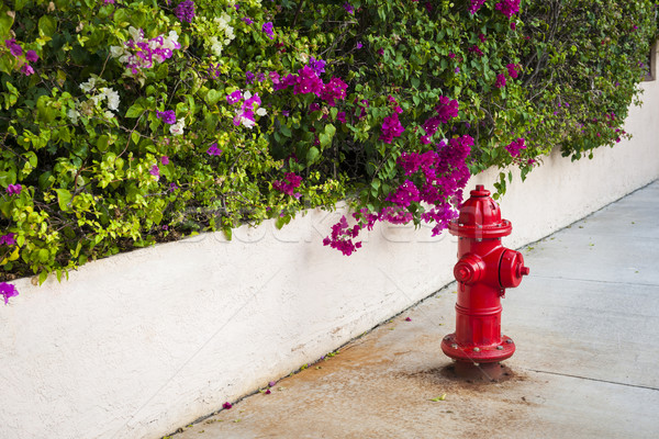 Key West fire hydrant Stock photo © elenaphoto