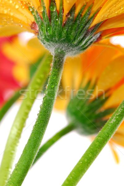 Foto d'archivio: Fiori · parecchi · colorato · rugiada · gocce · view
