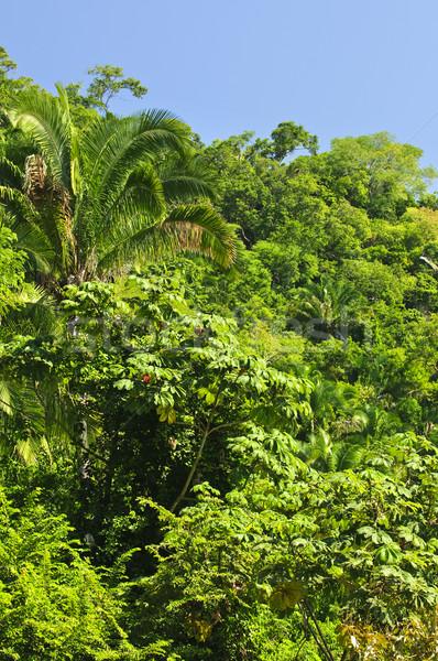 Tropicali giungla sfondo lussureggiante costa Messico Foto d'archivio © elenaphoto