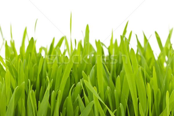 Herbe verte frontière vert herbe Photo stock © elenaphoto
