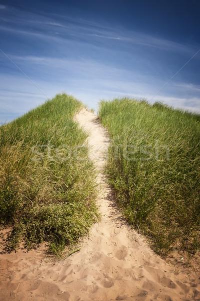 Path to beach over grassy sand dunes Stock photo © elenaphoto
