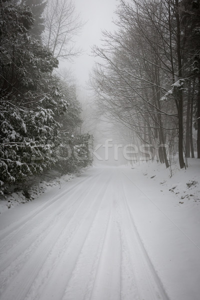Winter road during snowfall Stock photo © elenaphoto