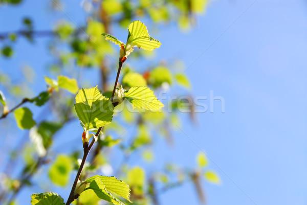 Spring Stock photo © elenaphoto