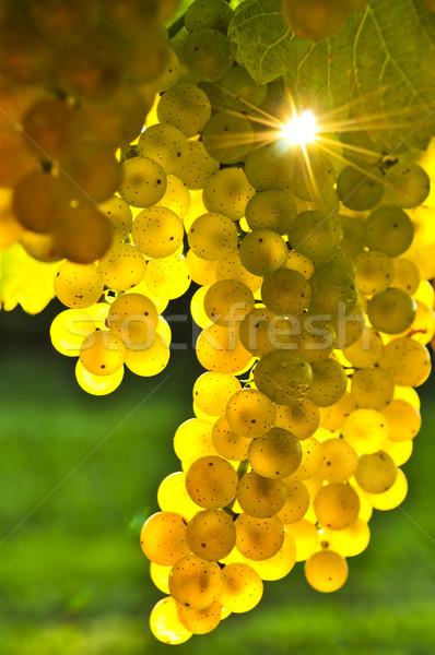 Stock photo: Yellow grapes