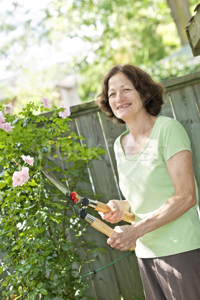 Senior woman pruning rose bush Stock photo © elenaphoto