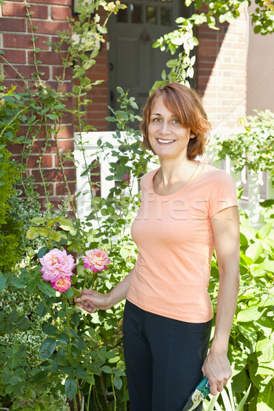 Woman pruning rose bush Stock photo © elenaphoto