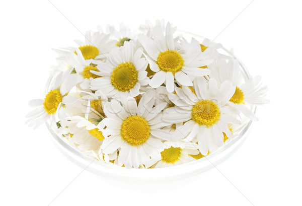 Chamomile flowers Stock photo © elenaphoto