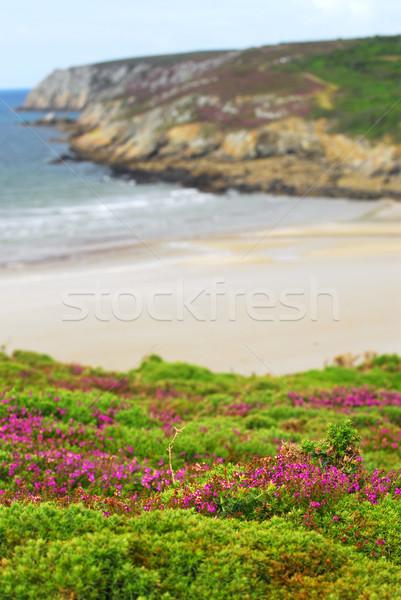 Zdjęcia stock: Wybrzeża · ocean · kwiaty · wody · morza