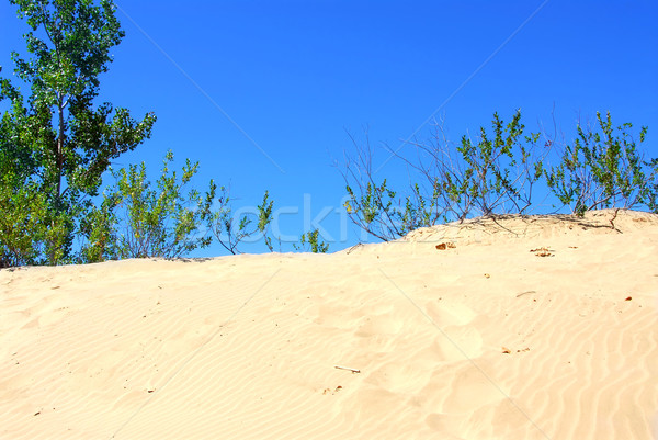 Sand dunes Stock photo © elenaphoto