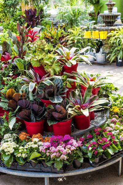 Pflanzen verkauf anlage laden display rack for Pflanzen laden berlin