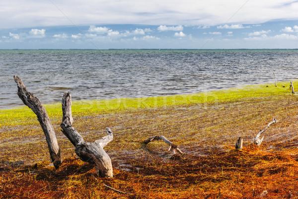 Флорида ключами цветами мертвых дерево Сток-фото © elenaphoto