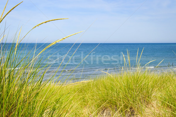 Sand dunes at beach Stock photo © elenaphoto