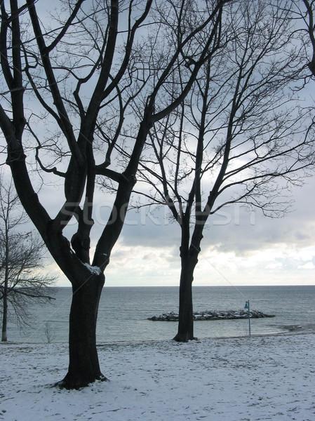 Winter Bäume Seeufer schwarz Silhouetten Stahl Stock foto © elenaphoto