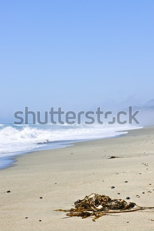 Coast of Pacific ocean in Canada Stock photo © elenaphoto