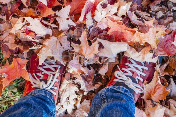 Feet standing in fallen maple leaves Stock photo © elenaphoto