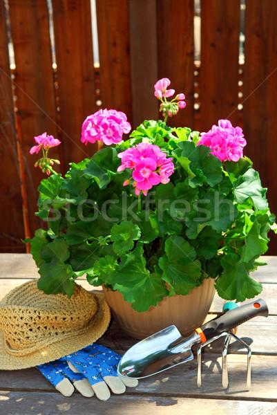 Gardening tools Stock photo © elenaphoto