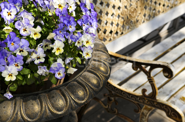 Stock photo: Planter with pansies and bench