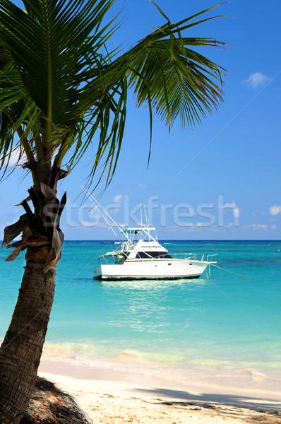 Foto stock: Playa · tropical · palmera · playa · mar · belleza