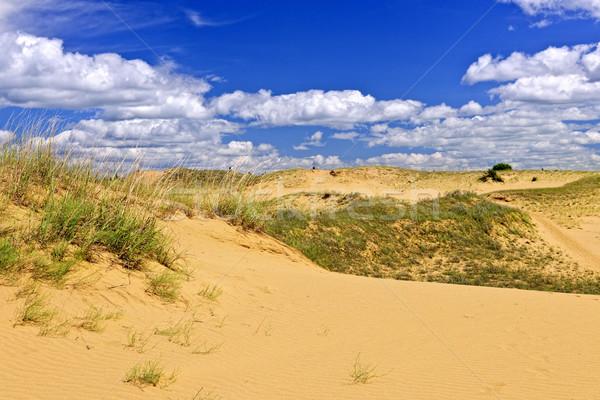 Desert landscape in Manitoba, Canada Stock photo © elenaphoto