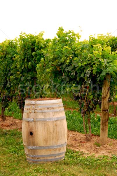 Foto stock: Vinho · barril · vinha · velho · textura · folha