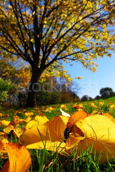 Autumn landscape Stock photo © elenaphoto