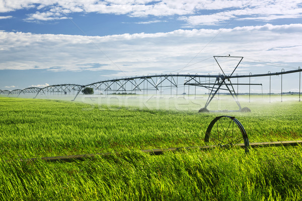 Irrigation equipment on farm field Stock photo © elenaphoto