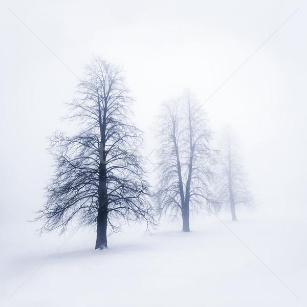 Zimą drzew przeciwmgielne mglisty Zdjęcia stock © elenaphoto