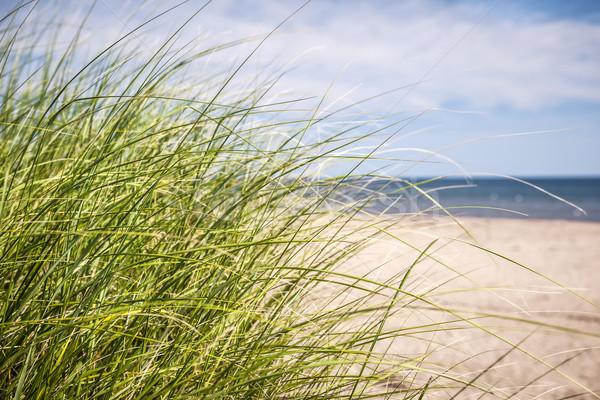 Playa hierba creciente playa de arena costa isla del príncipe eduardo Foto stock © elenaphoto