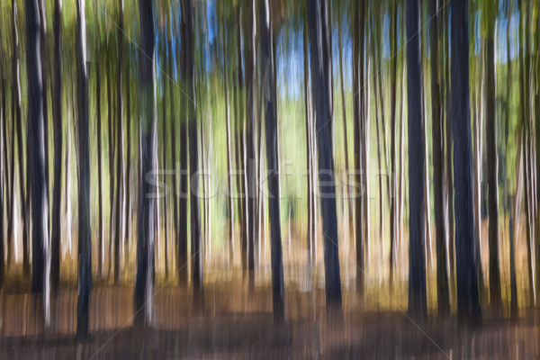 Pine bos abstract landschap bomen heldere Stockfoto © elenaphoto