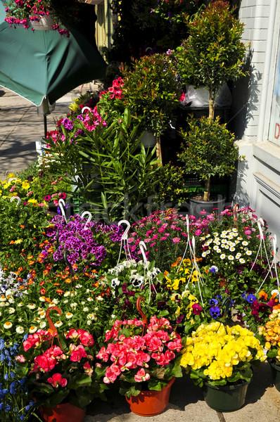 Flor venda suporte flores jardim mercado Foto stock © elenaphoto