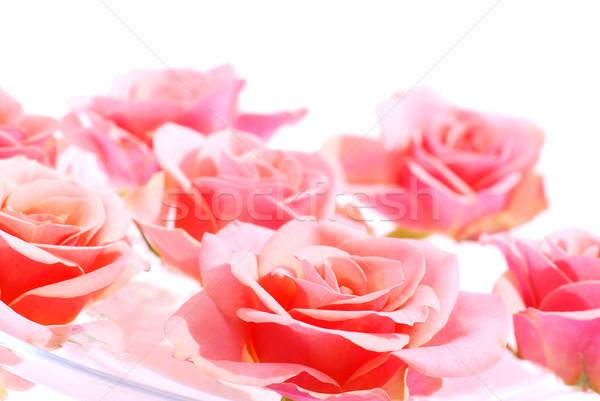 Stok fotoğraf: Pembe · güller · su · beyaz · uzay