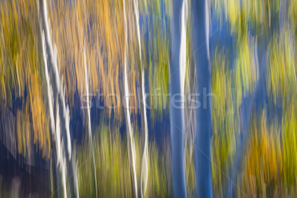 Blue birches on lake shore Stock photo © elenaphoto