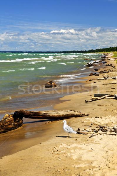 Praia troncos praia ondas gaivota parque Foto stock © elenaphoto