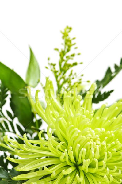 Flor floral verde Pascua Foto stock © elenaphoto