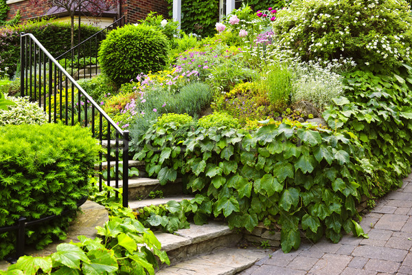 Natural stone garden stairs Stock photo © elenaphoto