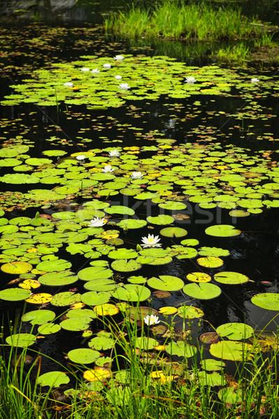 Lily pads on lake Stock photo © elenaphoto