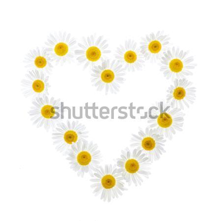 Daisy heart Stock photo © elenaphoto