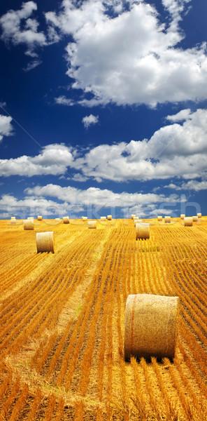 Granja campo heno agrícola paisaje dorado Foto stock © elenaphoto