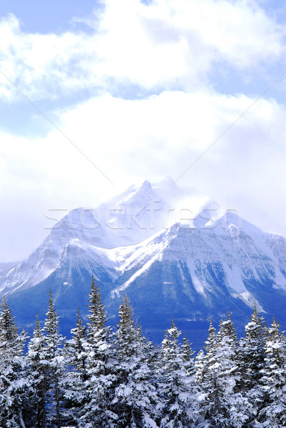 Snowy mountain Stock photo © elenaphoto
