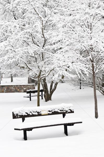 Winter park landschap bank sneeuw boom Stockfoto © elenaphoto